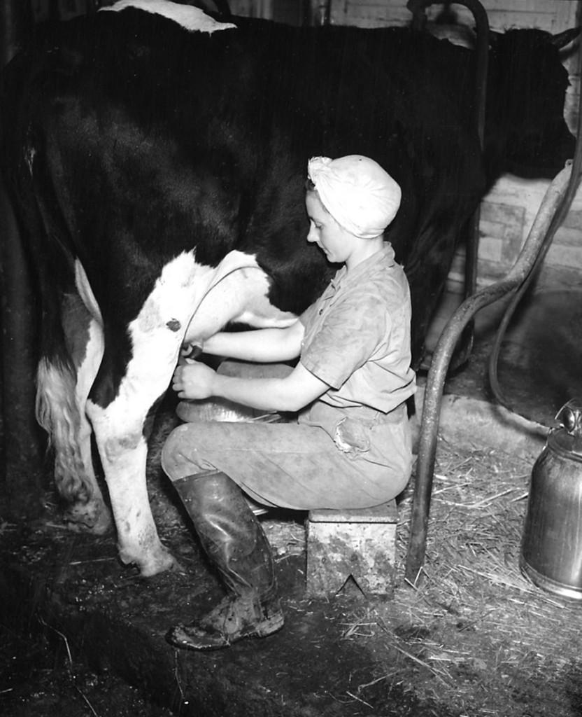 milking_crop_02