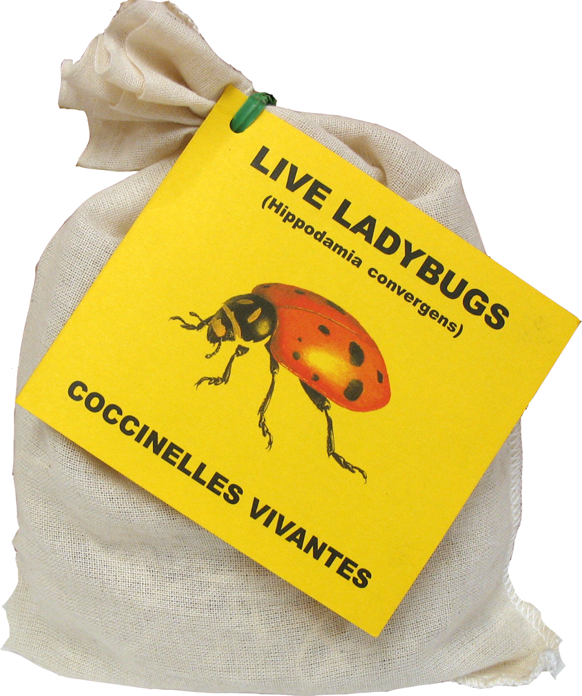 food-and-farming-organic-agriculture-live-ladybugs-bag