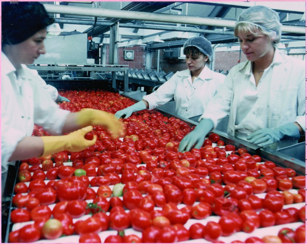food-safety-producers-today-sorting-tomatoes