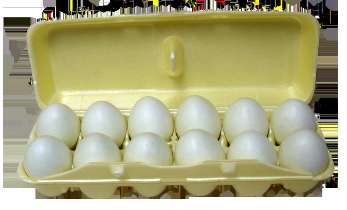 Les œufs : de la ponte à l'emballage – Food For Health